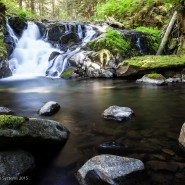 Olympic National Park - Temperate Rainforest