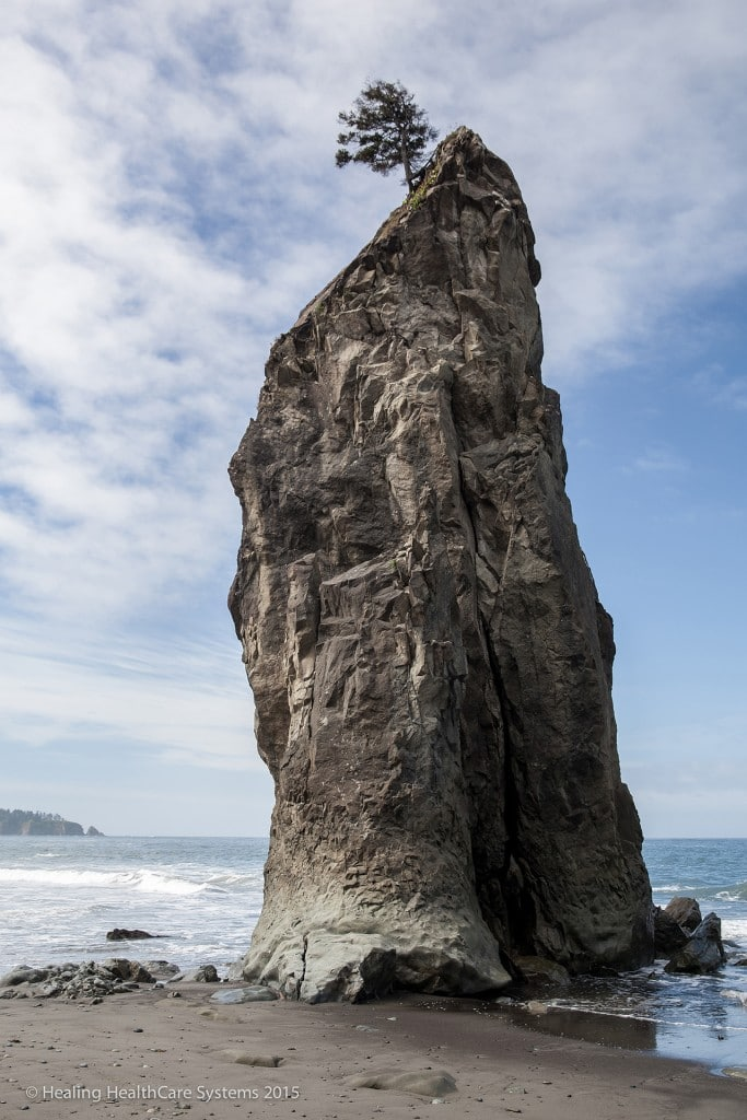 Olympic National Park - Rugged Coast