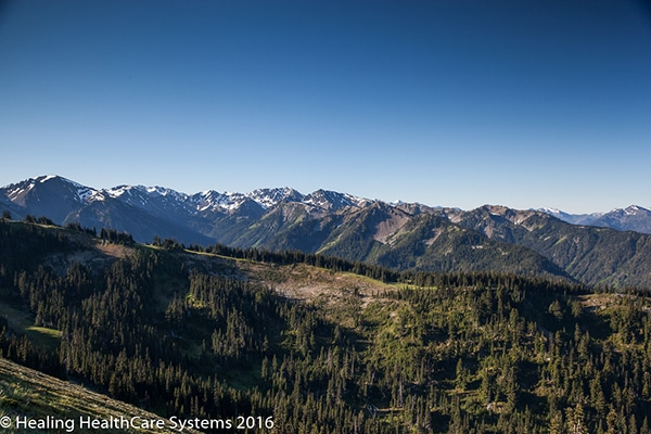 Olympic National Park - Sub Alpine