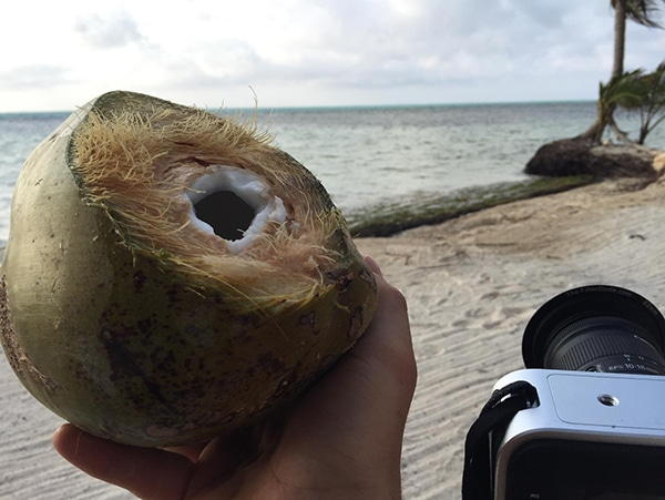 belize_coconut