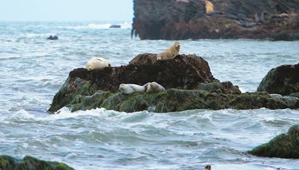 Trinidad, CA - Seals