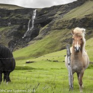waterfall and horses Iceland