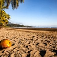 Costa Rica beach coconut